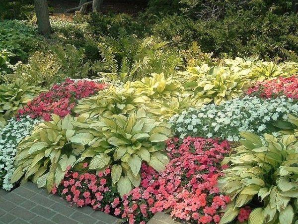 shade garden with hosta gardening flowers