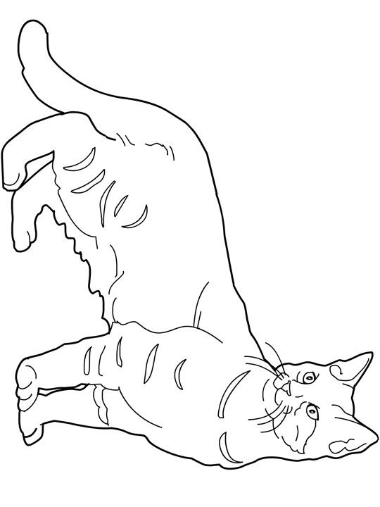 79 best images about Favorite Cat Colouring Pages on
