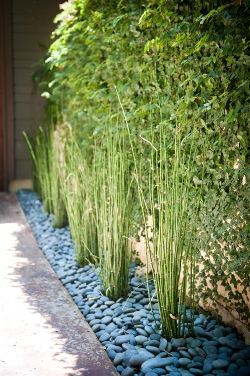 bamboo in stone bedding ' thinking