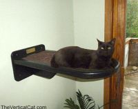 1000+ ideas about Cat Stairs on Pinterest | Cat wall ...