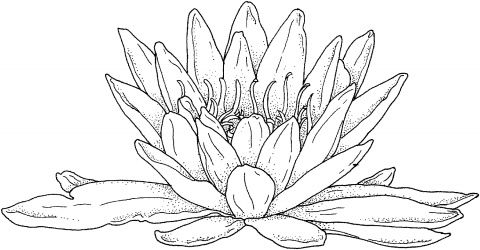 127 best images about Coloring pages Flowers on Pinterest