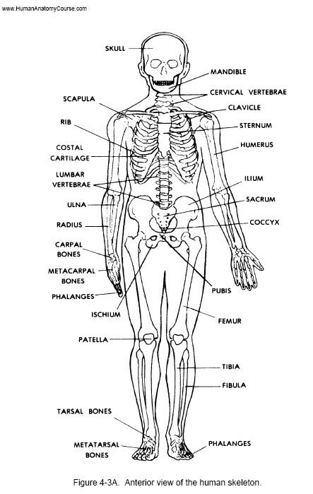 62 best images about Anatomy & Physiology on Pinterest