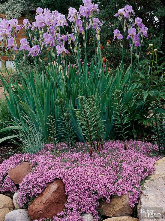 303 Best Images About Rock Gardens & Ground Covers On Pinterest