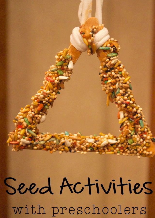 3 Fun Activities with Seeds for Preschoolers  Activities Crafts and Tech news