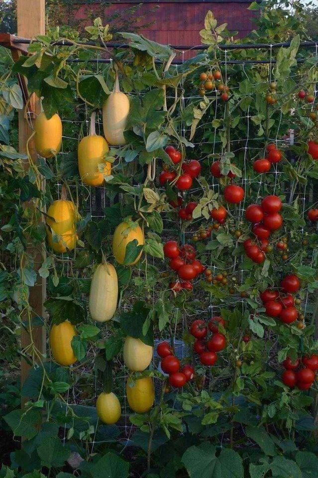 193 Best Images About Trellises On Pinterest Gardens Tomato