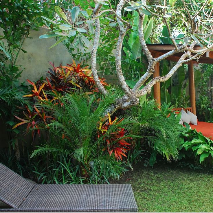 615 Best Images About Tropical Garden Idea's On Pinterest Indoor