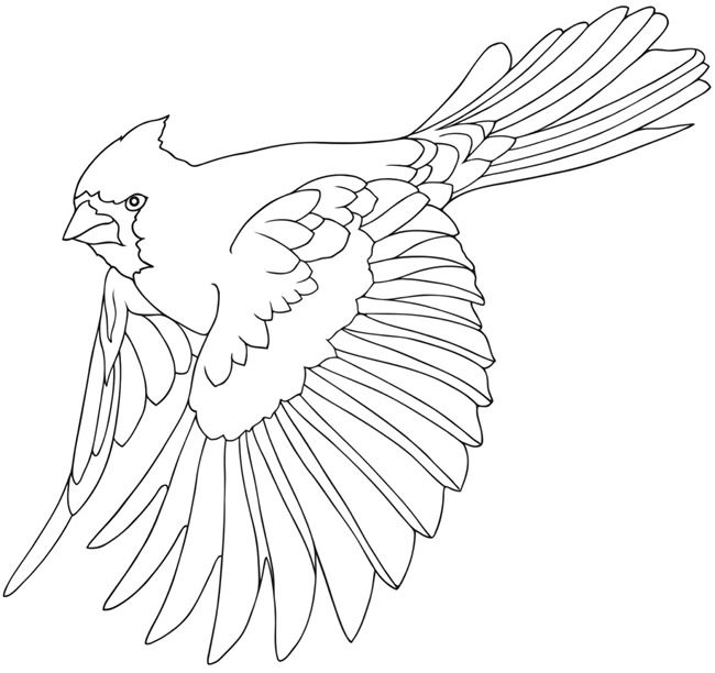 Best 25+ Bird Coloring Pages ideas that you will like on