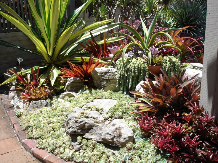21 Best Images About Succulent Rock Garden On Pinterest Gardens