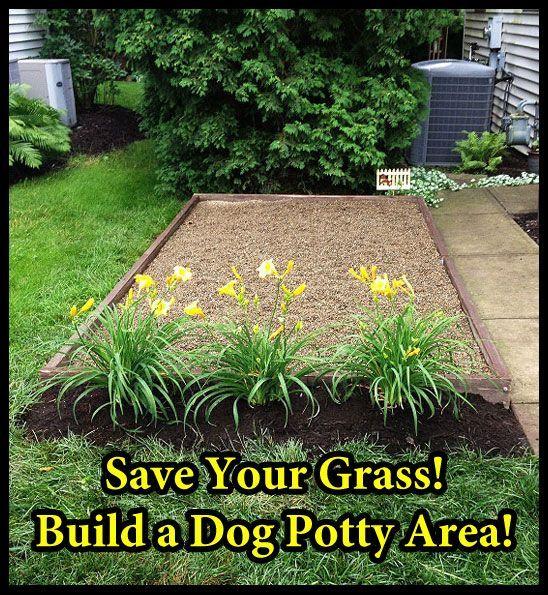 25 Best Ideas About Dog Friendly Garden On Pinterest Dog