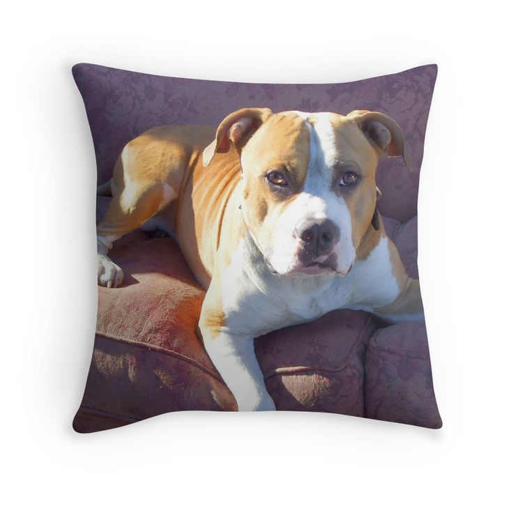 17 Best images about Pillows for the Dog lover on