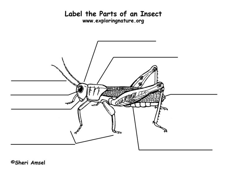 19 best images about Kindergarten Insects on Pinterest