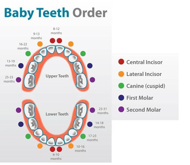 In what order do baby teeth fall out? - powerpointban.web ...