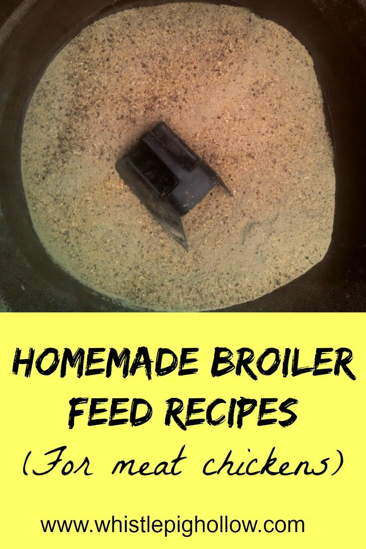 Homemade Broiler Feed Recipes  Whistle Pig Hollow