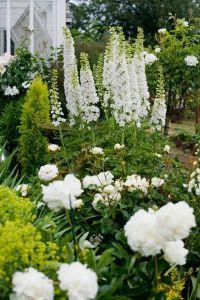 A vignette of white delphinium stalks, peonies, and roses ...