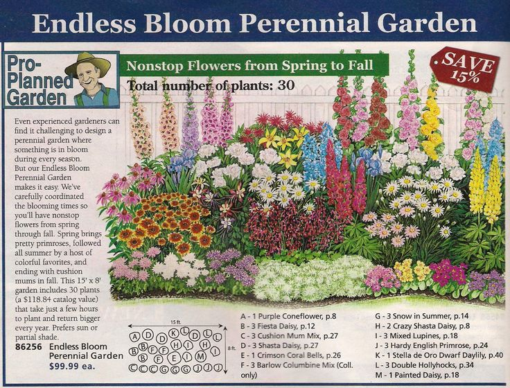 25 Best Ideas About Perennial Gardens On Pinterest Summer