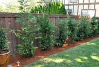 530 best images about landscaping ideas on Pinterest ...