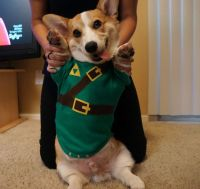 "Awesome Corgi ""Legend Of Zelda"" Link Costume 