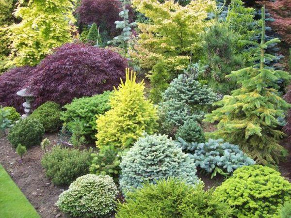 sprucebud's plant combinations