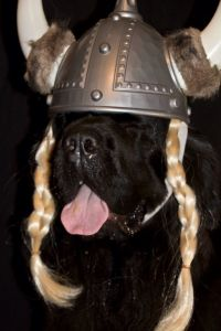 17 Best images about Cute Dog Halloween Costumes on ...