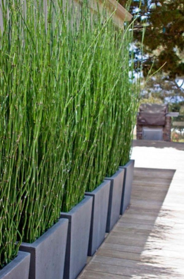 25 Best Ideas About Bambus Sichtschutz On Pinterest Große