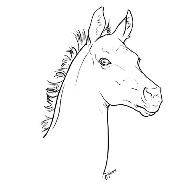 Free foal head lineart by jiphorse.deviantart.com on
