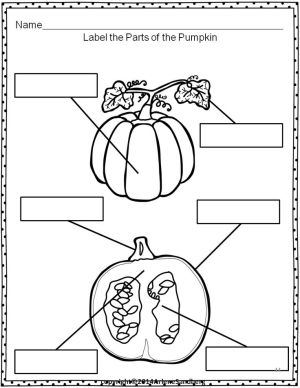 144 best images about Fall Themes Kindergarten on