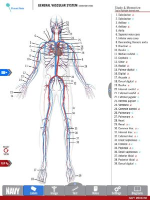 Diagram of the General Vascular System from the free