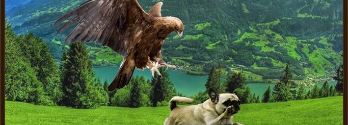 Raptor Shield protect your dog from birds of prey Hawk