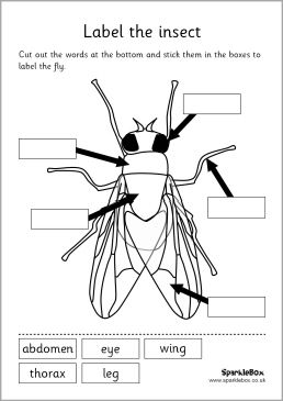 Insects, Worksheets and Grade 2 science on Pinterest