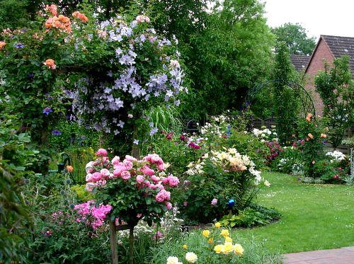17 Best Images About Rosen Und Clematis On Pinterest Gardens