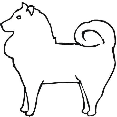 Vizsla Dogs For Sale In Az