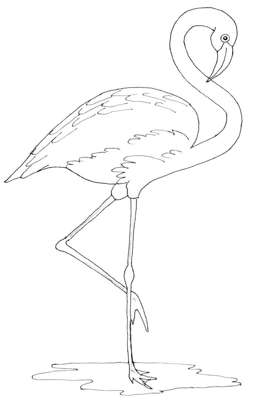 17 Best ideas about Flamingo Pattern on Pinterest
