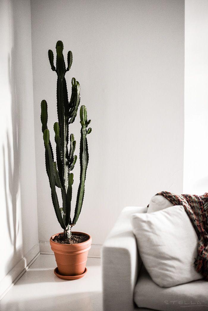 Best Indoor Plants Hanging House