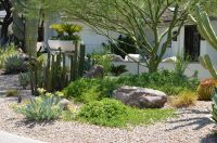 Creating a Lush Desert Oasis in the Urban Landscape ...