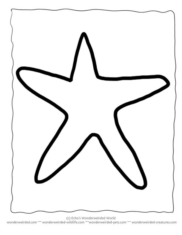 Printable Starfish Template, Echo's Free Starfish Outline