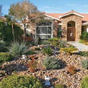 430 Best Images About Drought Tolerant Gardens On Pinterest