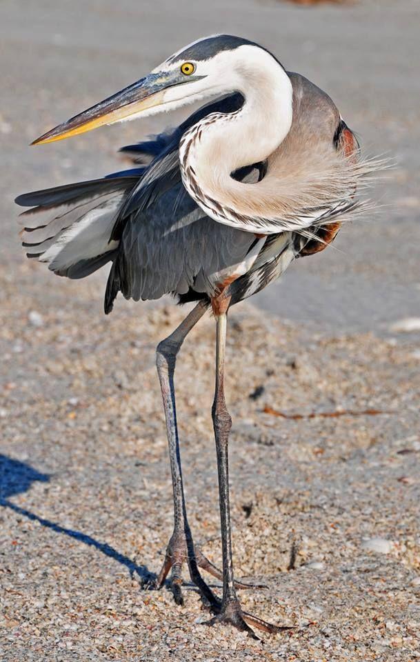 Identify Birds Garden Bird Identification You