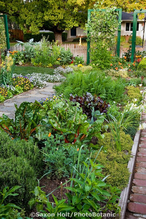 25 Best Ideas about Edible Garden on Pinterest  Flowers