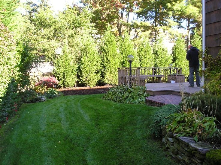 17 Best Ideas About Shrubs For Privacy On Pinterest