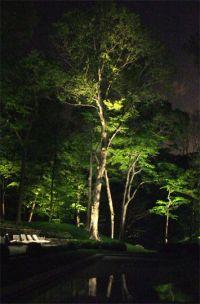 25+ best ideas about Outdoor Tree Lighting on Pinterest ...