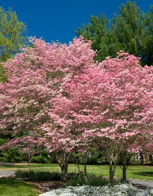 100 Ideas To Try About Trees Trees Weeping Willow And Shrubs