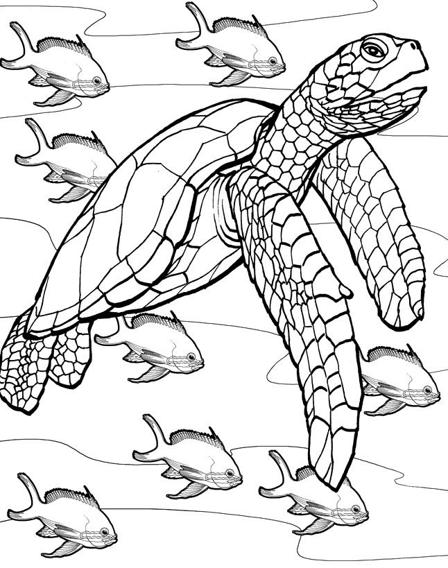17 Best images about Fish coloring templates on Pinterest