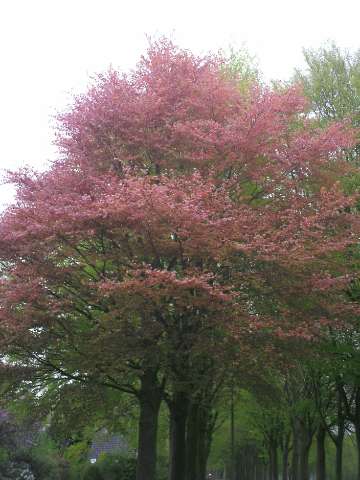 Fall Color Wallpaper For Desktop 1000 Images About Beech Trees On Pinterest