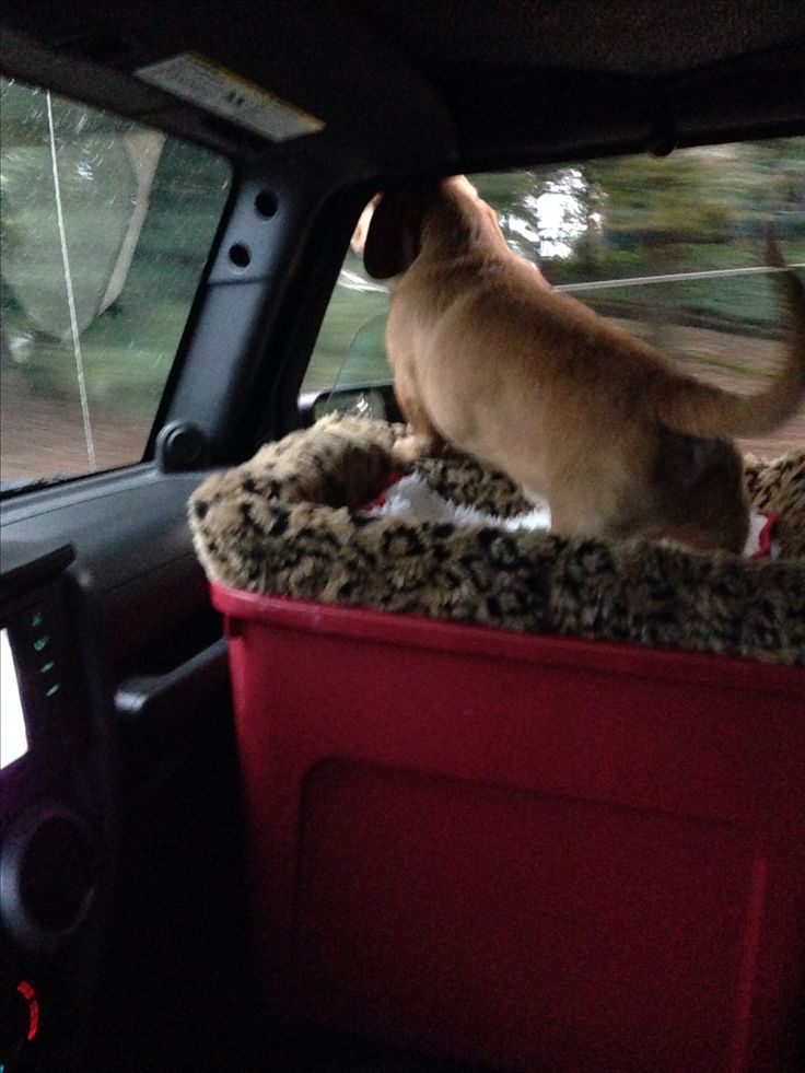 7 best images about Dog Car Seat on Pinterest  Cars
