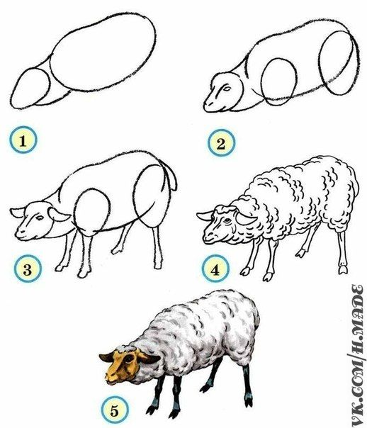 Learn to draw animals. Discussion on LiveInternet