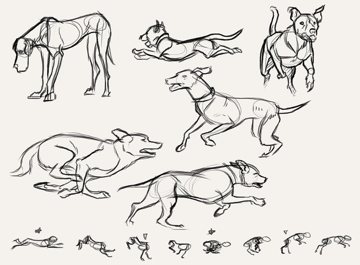 200 best images about Reference: Anatomy (Pose) on