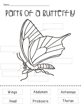 Activity+1+-+Students+cut+out+the+parts+of+a+butterfly+and