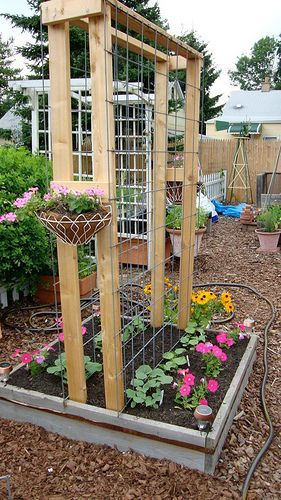 25 Best Ideas About Cucumber Trellis On Pinterest Cucumber