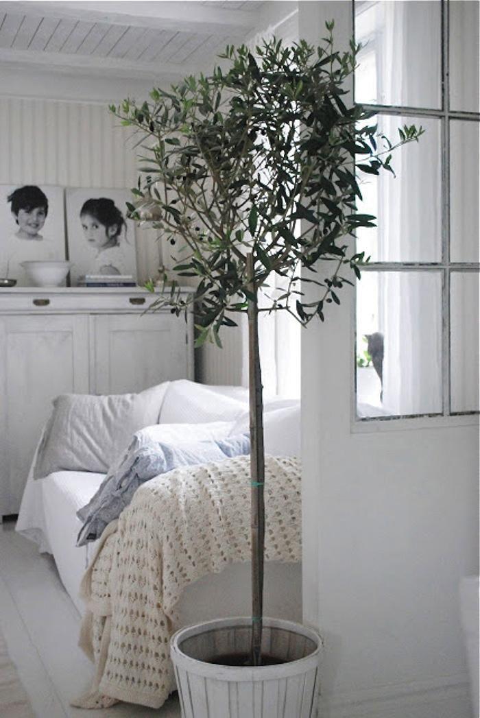 potted indoor olive tree in white bedroom via Gardenista