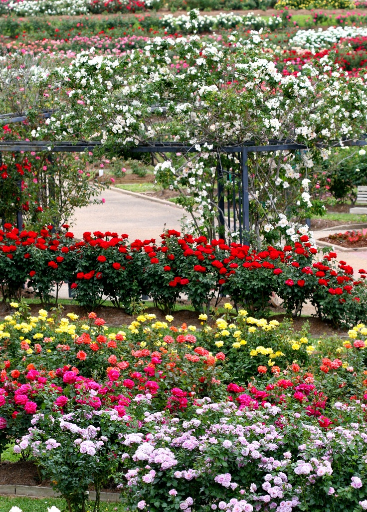 27 Best Images About Ideas To Make A Rose Garden On Pinterest